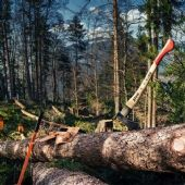 Stihl Hand tools for Forestry Work and Tree Felling
